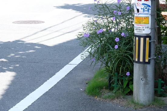 Shinmachi Furumachi // เวลามีความสุข ดอกหญ้าข้างทางก็ยิ่งสวย