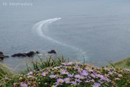 ดอกหญ้าเจจู // Seongan Itchulbong peak