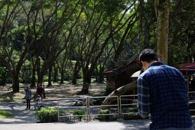 สวนสาธารณะระหว่างทางที่ไป มีไม้ใหญ่ร่มรื่นมากมาย