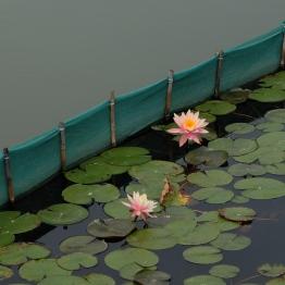 Hong Kong wetland