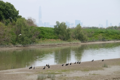 นก นก นก Hong Kong wetland Park
