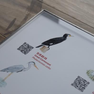 รูปนกพร้อมชื่อ พอดูของจริงมาเทียบแล้วสนุกมาก