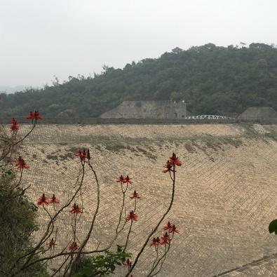 Pineapple dam