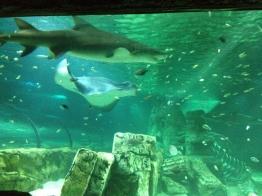 Sydney Sea Life Aquarium